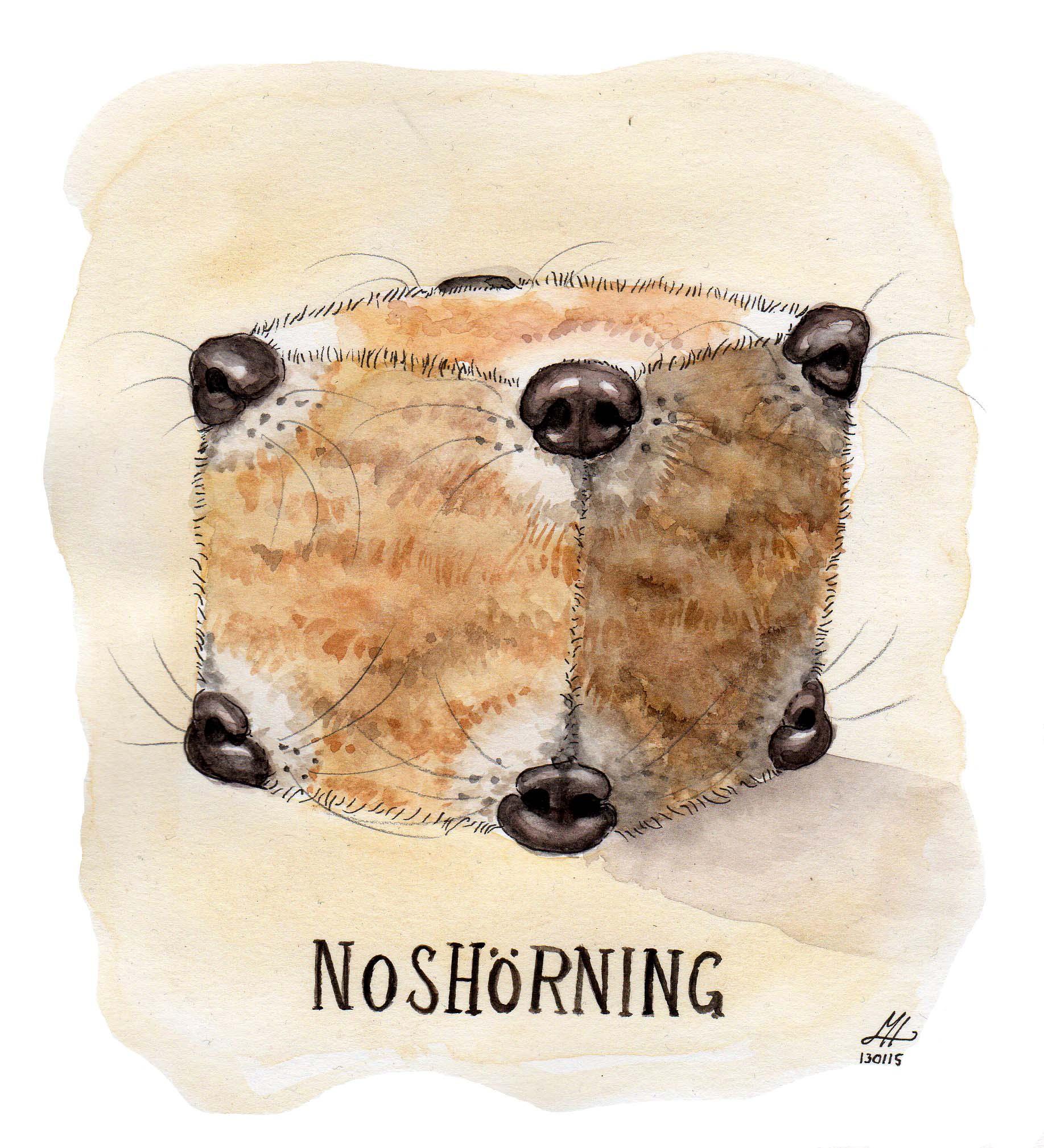 noshörning ordvits